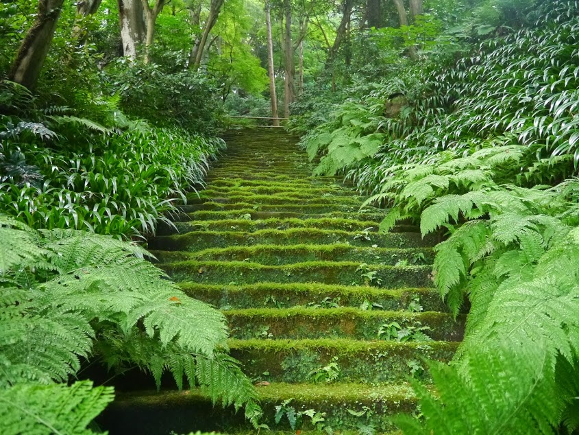 7月21日(日)緑あふれる夏の苔寺 お寺ヨガ@妙法寺書院  参加者募集!